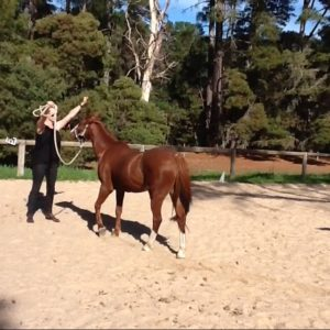 Corporate Leadership - Horse Whisperer team building activities Adelaide